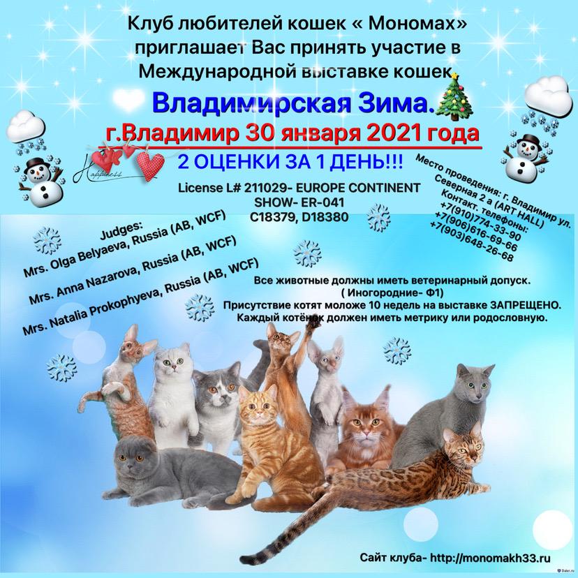 Выставка кошек «Владимирская Зима-2021» 30 января  2021 года.