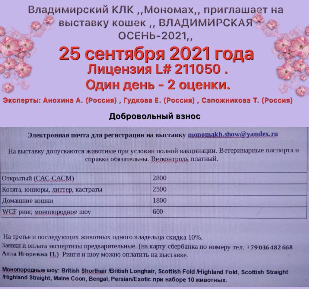 Выставка кошек «Владимирская Осень-2021» 25 сентября  2021 года. Две оценки за один день.