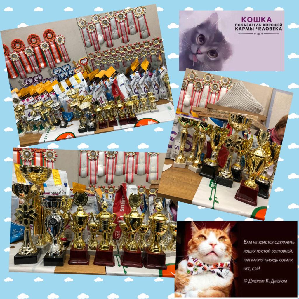 Прошедшая выставка кошек «Владимирская Осень-2021» 25 сентября  2021 года. Две оценки за один день.